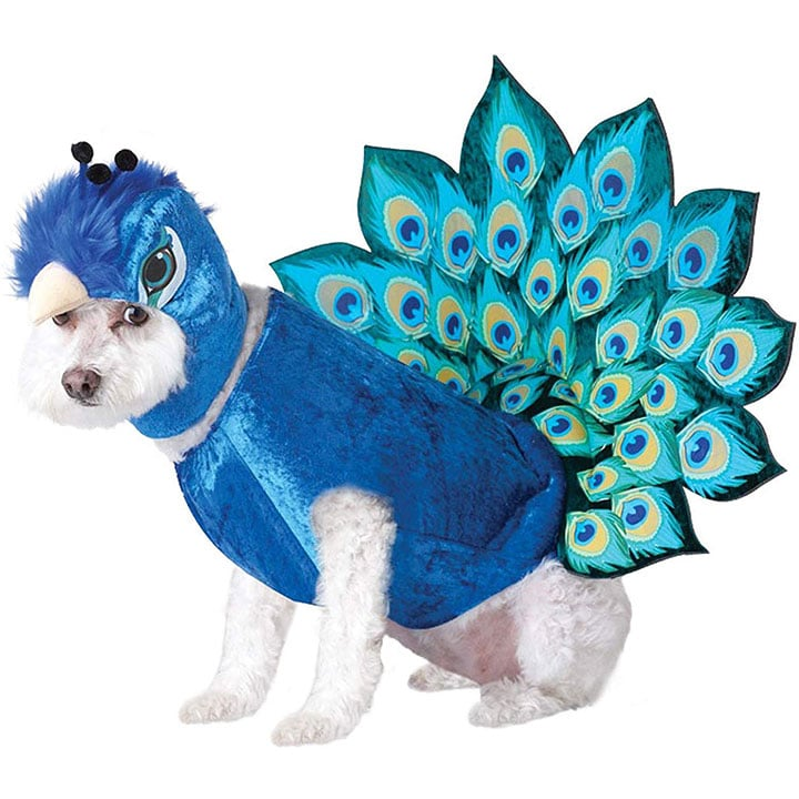 peacock-dog-costume