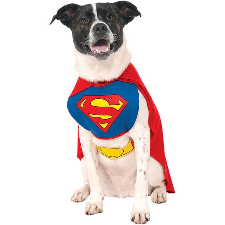superman-dog-costume