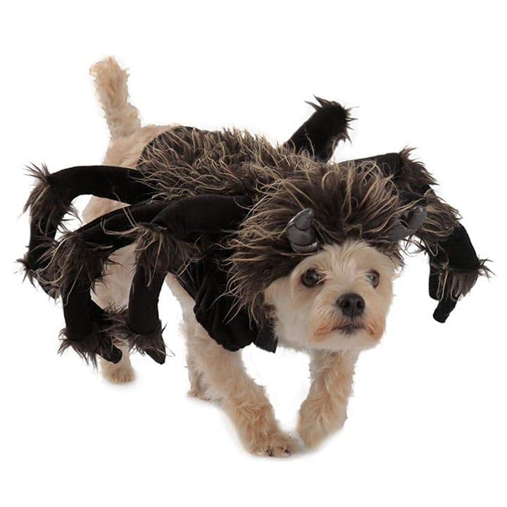 tarantula-dog-costume