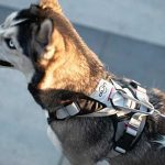 DUO Adapt Control Dog Harness Review