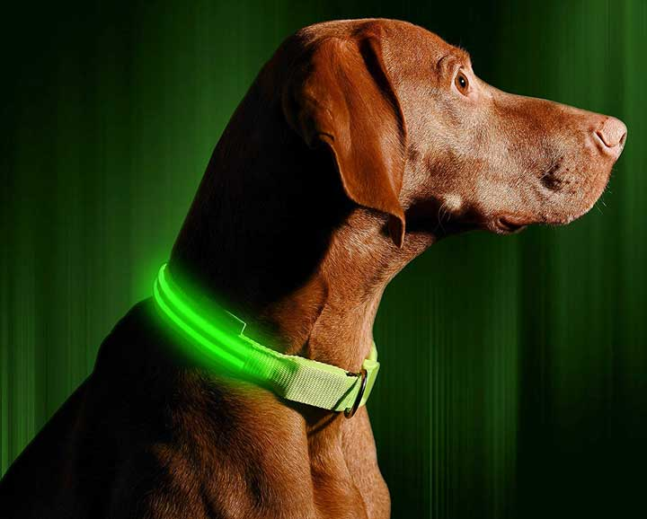 illumiseen-led-dog-collar
