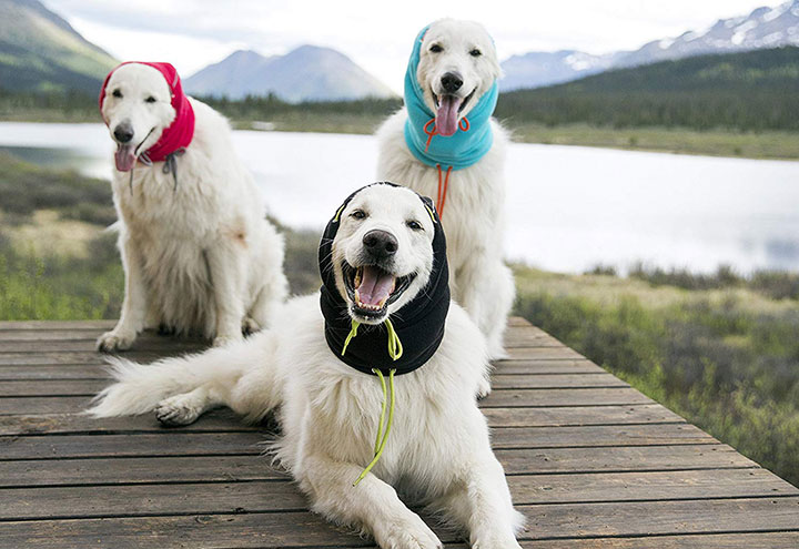 rc-pets-summit-dog-snood