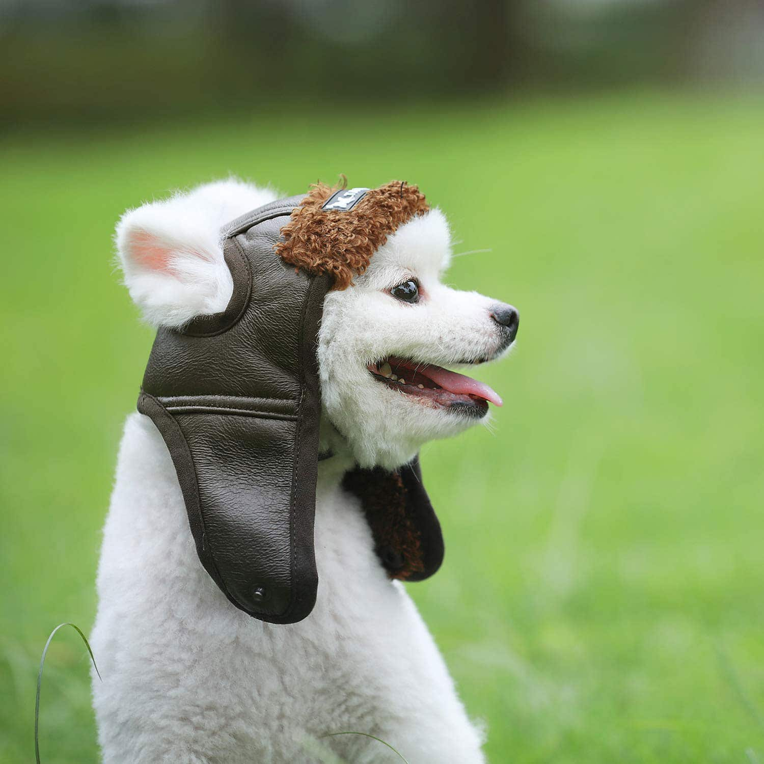 haocoo-dog-aviator-hat
