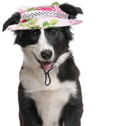 mihachi-flowered-dog-hat