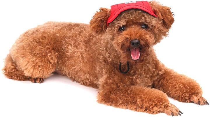 pawaboo-dog-baseball-cap