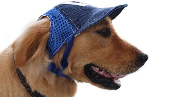 petall-dog-baseball-hat