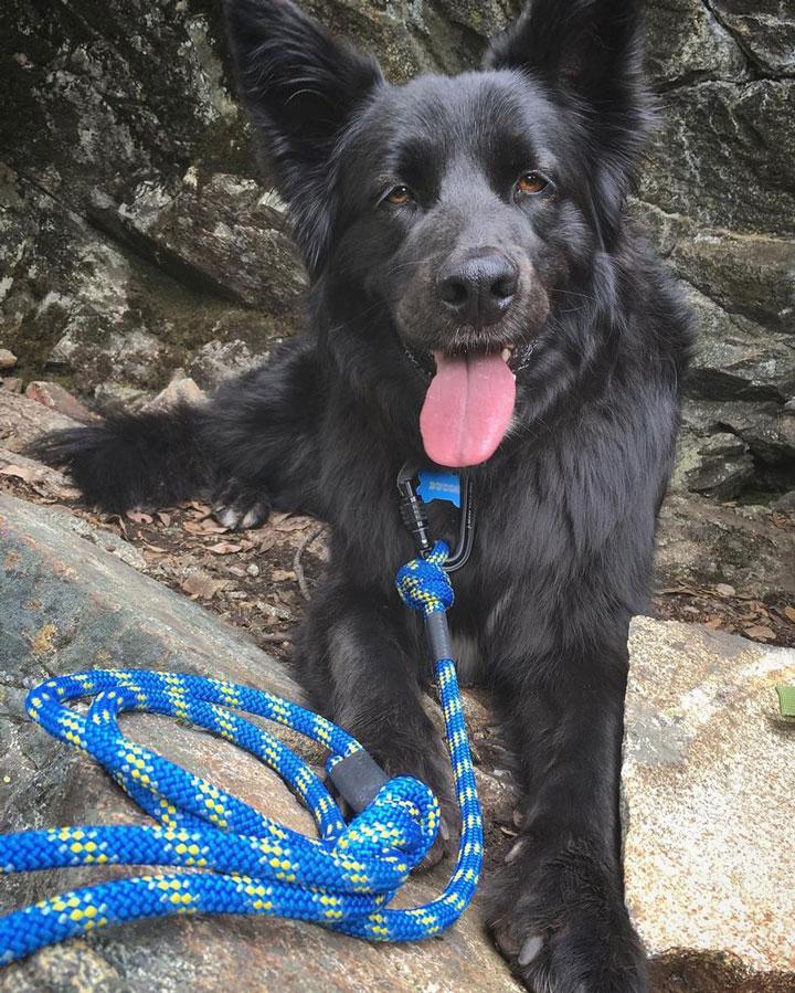 wilderdog-mariner-long-leash