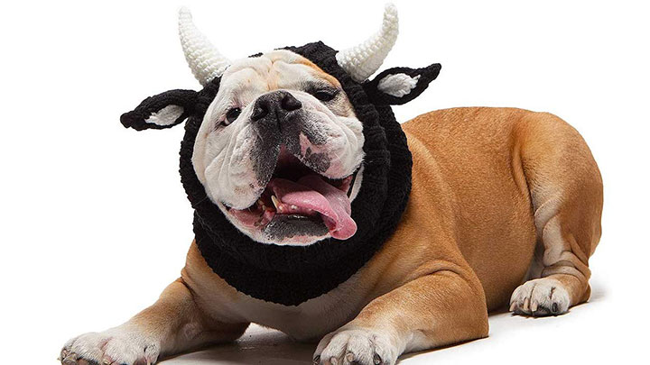 zoo-snoods-bull-dog-hat