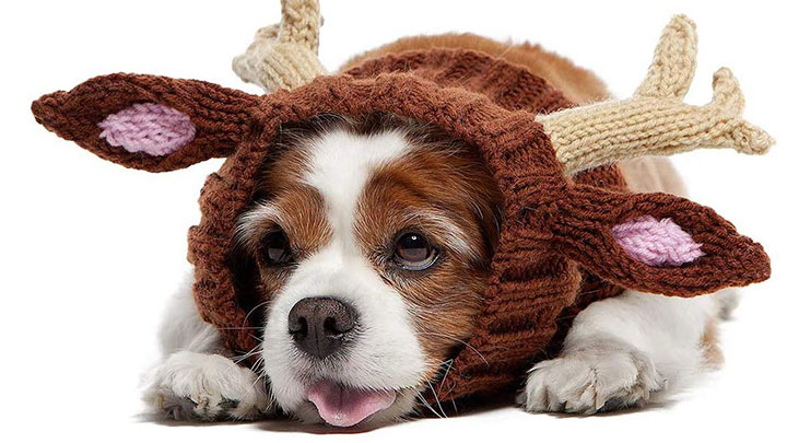 zoo-snoods-reindeer-hat-for-dogs