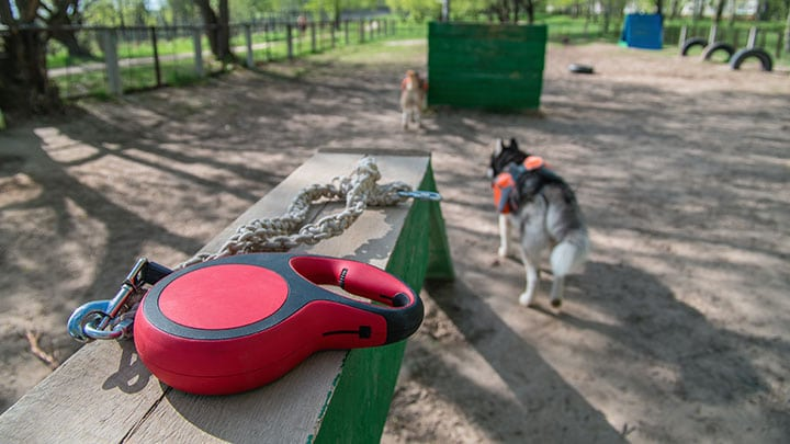 best-retractable-dog-leash-for-walking