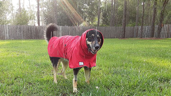 K9 Apparel Dog Rain Coat