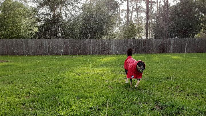 k9-apparel-custom-dog-rain-coat-review