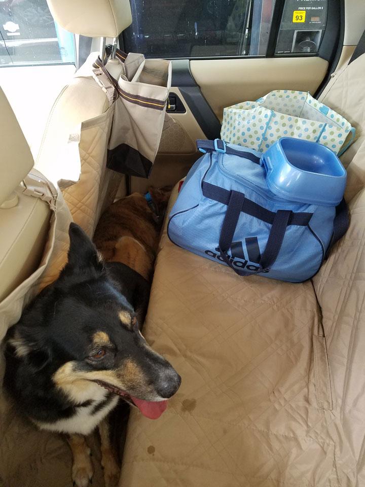 dog car seat cover backseat
