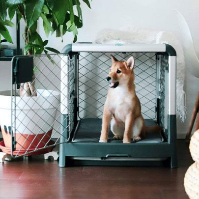 diggs-revol-small-dog-crate