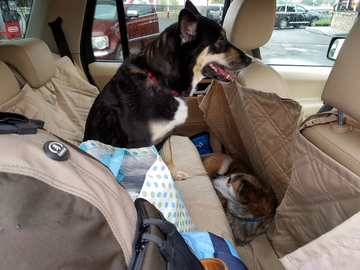 two dogs car seat cover for road trip