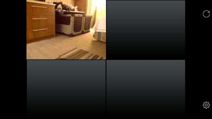 icam-dog-monitoring-with-laptop