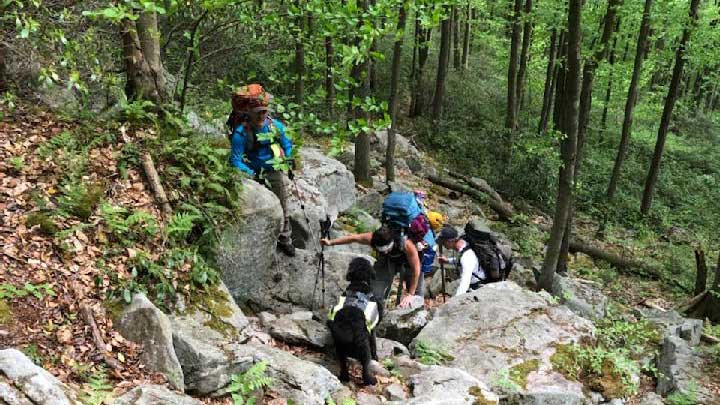 black-forest-trail-dog-hiking