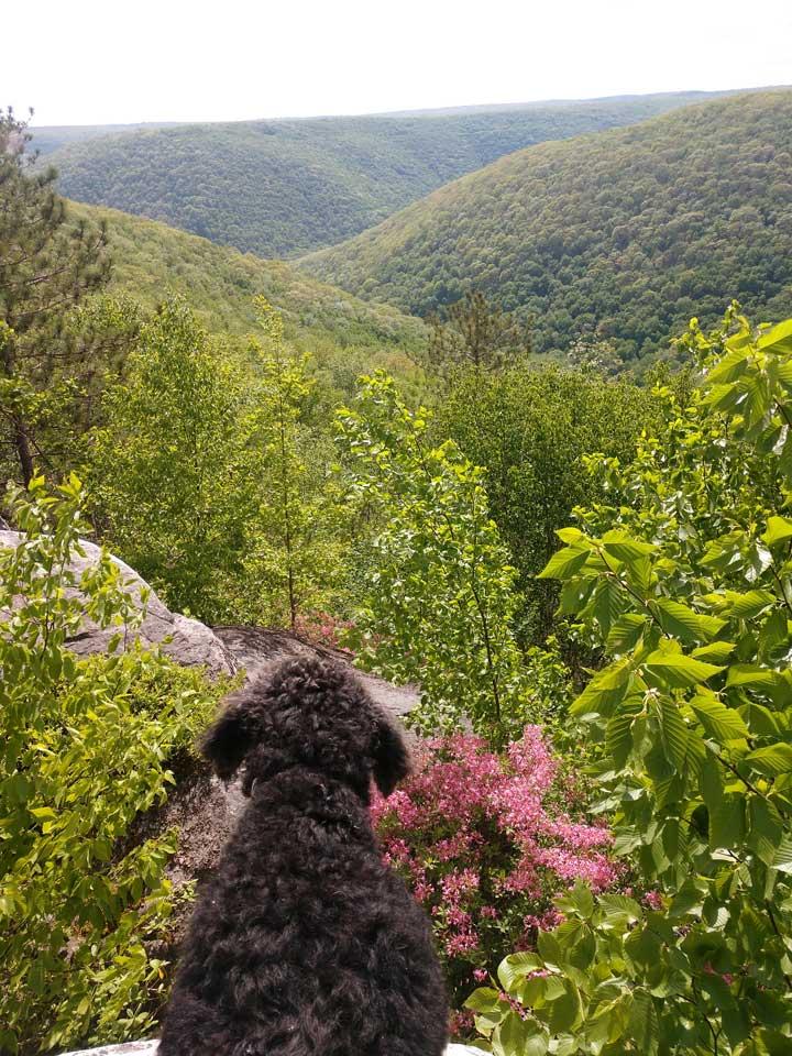 black-forest-trail-summit-overlook