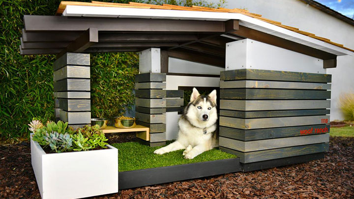 modern-dog-house-mid-century-ranch
