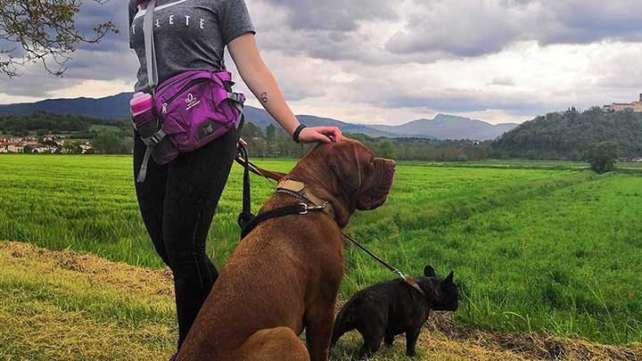 waterfly-dog-waist-pack