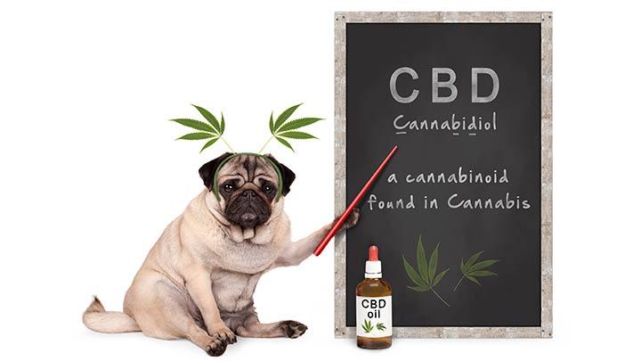 best-cbd-oil-for-dogs