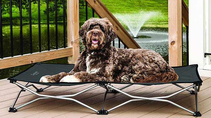 carlson-pet-products-elevated-folding-pet-bed
