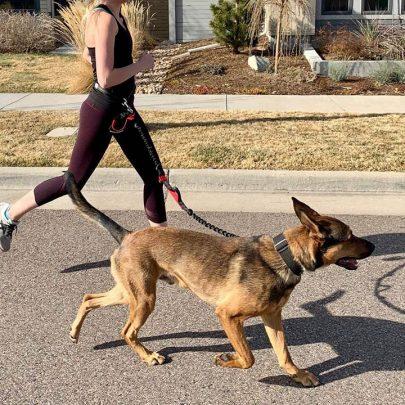 iron-doggy-runners-hands-free-dog-leash